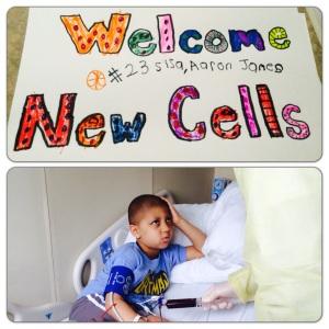 Hello stem cells!